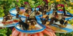 حديقة الفراشات بدبي الأولى من نوعها في الشرق الأوسط