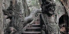 غابة القرود في بالي اوبود : أهم 10 معلومات وأنشطة يمكنك الاستمتاع بها