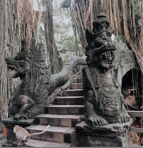غابة القرود في بالي